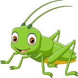 Cartoon grasshopper isolated on white background Stock Photography