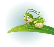 Cartoon grasshopper on leaf Royalty Free Stock Photos