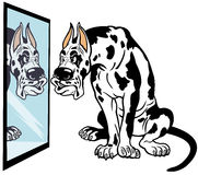 Cartoon great dane dog. Cartoon dog looking in mirror,great dane breed,illustration isolated on white background Royalty Free Stock Photos