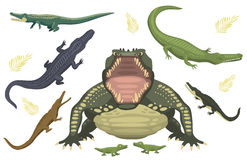 Cartoon green crocodile danger predator and australian wildlife river reptile carnivore alligator with scales teeth flat. Vector illustration. Tropical africa Royalty Free Stock Photo