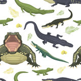 Cartoon green crocodile danger predator and australian wildlife river reptile carnivore alligator with scales teeth flat. Vector illustration. Tropical africa Stock Photography