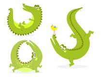 Cartoon green crocodile funny predator australian wildlife river reptile alligator flat vector illustration. Stock Image