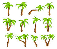 Cartoon green palm trees on a white background. Set of  funny cartoon tropical trees patterns icons, for filling Royalty Free Stock Image
