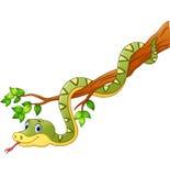 Cartoon green snake on branch Stock Photos