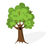 Cartoon green tree. Flat vector. Oak illustration, isolated on white background Stock Images
