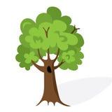 Cartoon green tree. Flat vector. Oak illustration, isolated on white background Stock Images