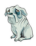 Cartoon grey bulldog with sad eyes Royalty Free Stock Image