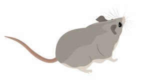 Cartoon grey mouse Royalty Free Stock Photo