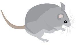 Cartoon grey mouse Stock Image