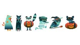 Vector flat halloween animals in spooky costumes. Cartoon halloween animal characters in spooky costumes set. Black witch catstanding on, scary pumpkin jack`o vector illustration