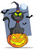 Cartoon halloween cat on pumpkin Royalty Free Stock Image