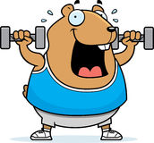 Cartoon Hamster Dumbbells Royalty Free Stock Image