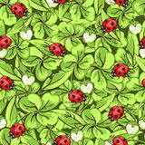 Cartoon hand drawing beetle ladybug, leaves and flowers of clover seamless pattern, vector background. Funny insects on Royalty Free Stock Image