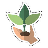 Cartoon hand holding plant leaves. Vector illustration eps 10 Royalty Free Stock Photography