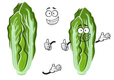 Cartoon happy chinese cabbage vegetable. Green and white head of chinese cabbage vegetable with fresh crunchy leaves. Smiling cabbage character for vegetarian Royalty Free Stock Images