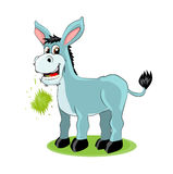 Cute donkey Stock Images