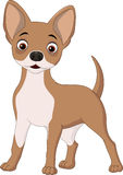 Cartoon happy dog. Illustration of Cartoon happy dog vector illustration