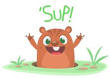 Cartoon  Happy Groundhog day card with cute brown groundhog or marmot or woodchuck isolated on white background.  Royalty Free Stock Photos