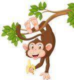 Cartoon happy monkey hanging and holding banana Stock Image