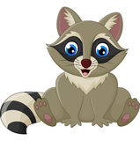 Cartoon happy raccoon sitting Royalty Free Stock Photography