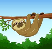 Cartoon happy sloth hanging on the tree Royalty Free Stock Images