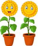 Cartoon happy sunflower Royalty Free Stock Photo