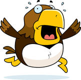 Cartoon Hawk Panic Royalty Free Stock Images