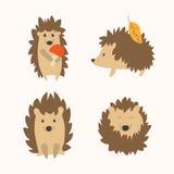 Cartoon Hedgehog Set. Vector Stock Image