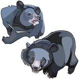 Cartoon Himalayan black bears Stock Image