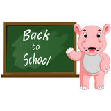 Cartoon Hippo wrote chalk on a blackboard Royalty Free Stock Images