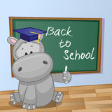 Cartoon Hippo wrote in classroom. Cartoon Hippo wrote chalk on a blackboard Royalty Free Stock Images
