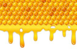 Cartoon honeycomb with honey dripping Stock Images