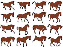 Cartoon Horse Assorted Poses Stock Images