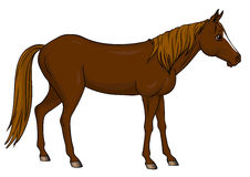 Cartoon horse standing Royalty Free Stock Photography