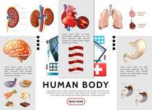 Cartoon Human Body Infographic Template Stock Photo