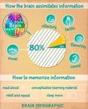Cartoon Human Brain Infographics Stock Image