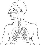 Cartoon Human Lungs Royalty Free Stock Photography