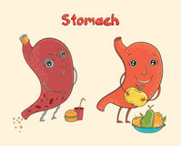 Cartoon human stomach character. Cartoon vector illustration of healthy and sick human stomach. Funny educational illustration for kids. Isolated characters Royalty Free Stock Image