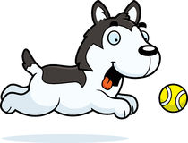Cartoon Husky Chasing Ball Stock Images