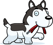 Cartoon Husky Leash Stock Photo