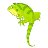 Cartoon Iguana Stock Photos
