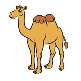 Cartoon illustration of cute camel Royalty Free Stock Photos