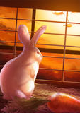 Cartoon illustration of cute white rabbit standing in sunset Stock Image