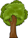 Cartoon illustration of deciduous tree Stock Photos