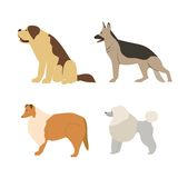Cartoon illustration dogs breeds. Stock Images