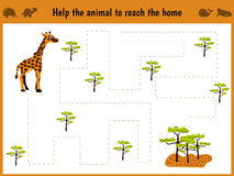 Cartoon illustration of education. Matching game for preschoolers to hold a wild animal giraffe home to sovanna. All pictures are Royalty Free Stock Photos