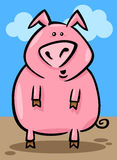 Cartoon illustration of farm pig Stock Photography