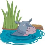 Hippo or hippopotamus in river cartoon. Cartoon Illustration of Happy Hippo Animal Character or Hippopotamus in the water royalty free illustration