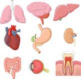 Cartoon illustration of internal human organs collection set stock illustration