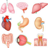 Cartoon illustration of Internal organs anatomy Royalty Free Stock Photo